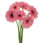 6 pcs pink Gerberas in bouquet